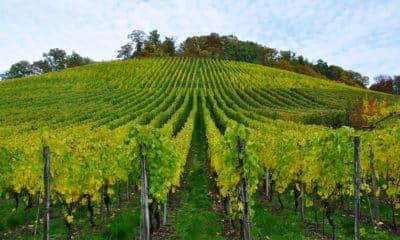 impianti irrigazione vigne